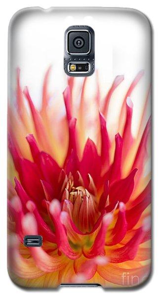 High Key Beauty Galaxy S5 Case