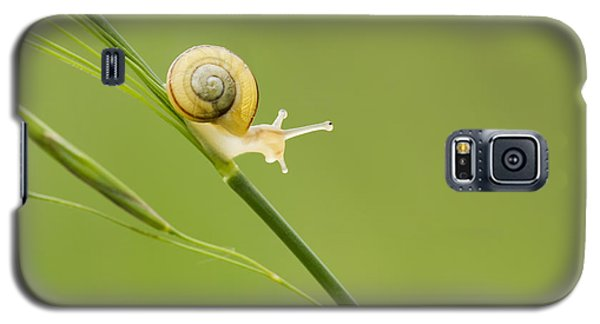 High Speed Snail Galaxy S5 Case by Mircea Costina Photography