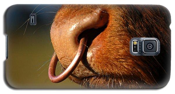 Highland Bull Galaxy S5 Case