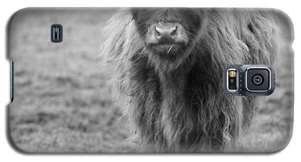 Highland Calf Galaxy S5 Case by Sonya Lang