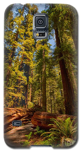 Hikers Paradise - California Redwoods I Galaxy S5 Case