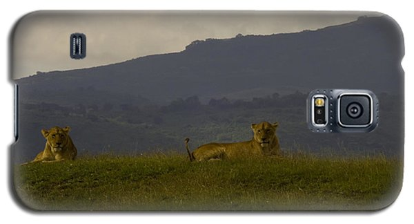 Galaxy S5 Case featuring the photograph Hillside Lions by J L Woody Wooden