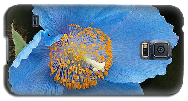 Himalayan Gift -- Meconopsis Poppy Galaxy S5 Case by Byron Varvarigos