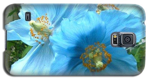 Himalayan Poppy Galaxy S5 Case