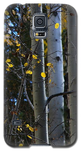 Galaxy S5 Case featuring the photograph Hint Of Gold by Ruth Jolly