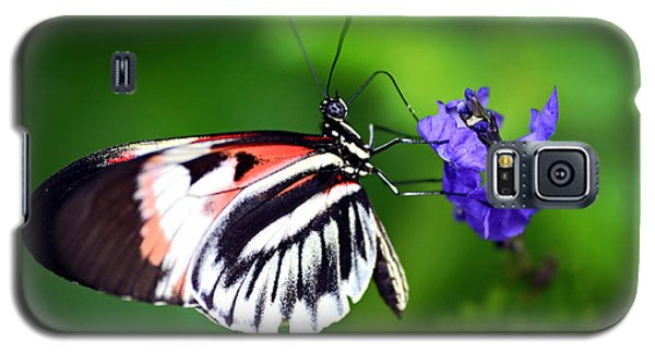 Hint Of Red Butterfly Galaxy S5 Case