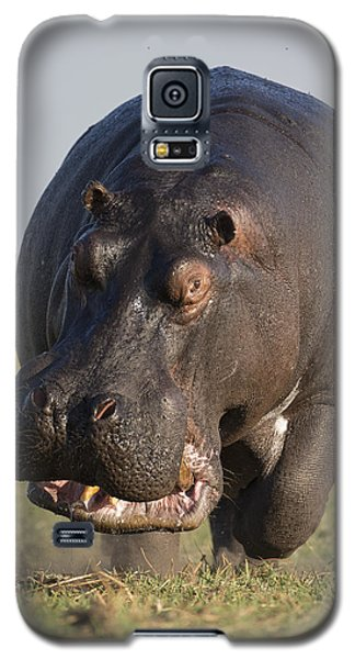 Hippopotamus Bull Charging Botswana Galaxy S5 Case by Vincent Grafhorst