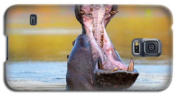 Hippopotamus Displaying Aggressive Behavior Galaxy S5 Case by Johan Swanepoel