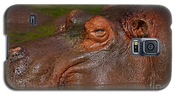 Galaxy S5 Case featuring the photograph Hippopotamus With Its Head Just Above Water by Nick  Biemans