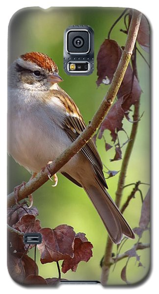 Galaxy S5 Case featuring the photograph His Eyes Are On The Sparrow by Phyllis Beiser