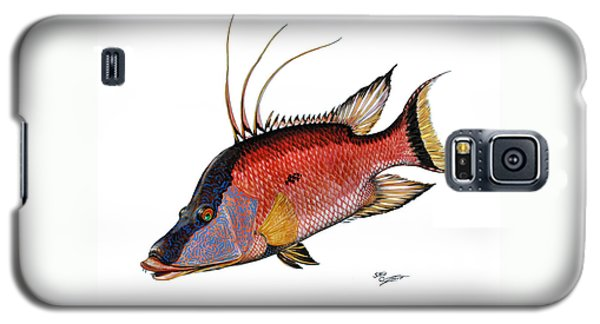 Hogfish On White Galaxy S5 Case