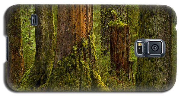 Hoh Rainforest 1 Galaxy S5 Case