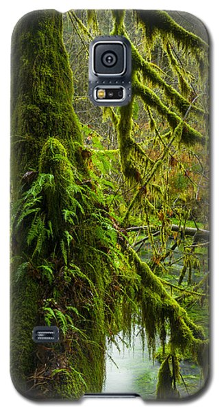 Hoh Rainforest 2 Galaxy S5 Case