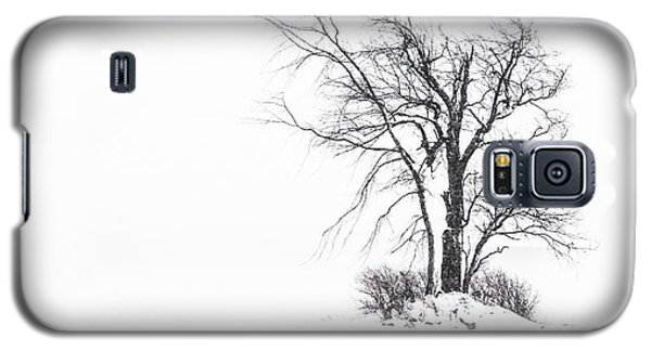 Holland Glenwood Tree Galaxy S5 Case by Don Nieman