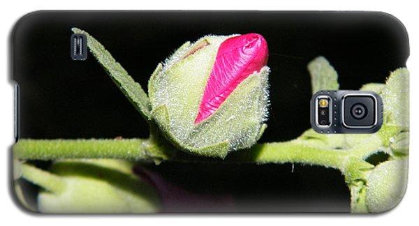 Hollyhock Buds Galaxy S5 Case