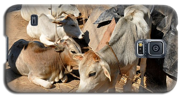 Holy Cows Odisha India Galaxy S5 Case