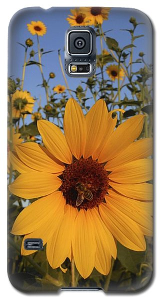 Honey Bee And Sunflowers Galaxy S5 Case