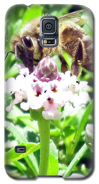 Galaxy S5 Case featuring the photograph Honey Bee At Work by Bonnie Muir