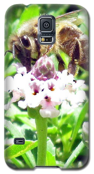 Honey Bee At Work Galaxy S5 Case by Bonnie Muir