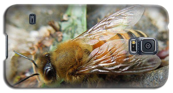 Galaxy S5 Case featuring the photograph Honey Bee by Pete Trenholm