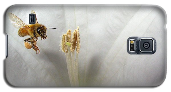 Honey Bee Up Close And Personal Galaxy S5 Case