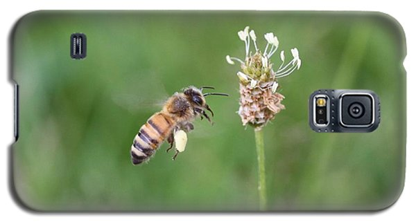 Honeybee And English Plantain Galaxy S5 Case by Lucinda VanVleck