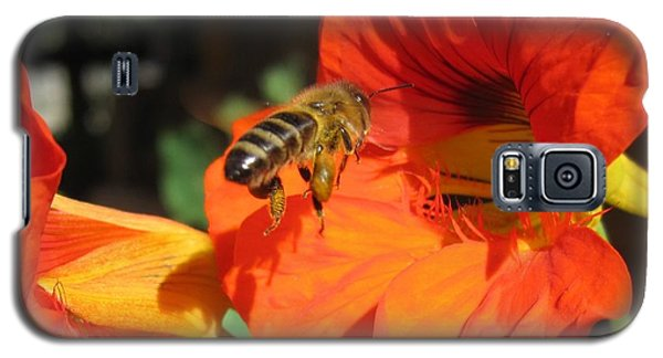 Honeybee Entering Nasturtium Galaxy S5 Case by Lucinda VanVleck