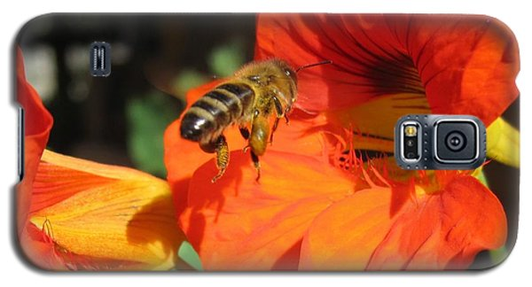 Honeybee Entering Nasturtium Galaxy S5 Case