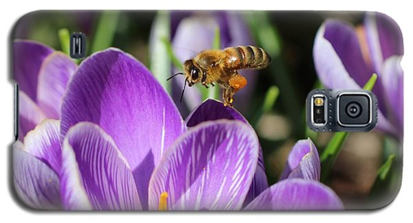 Honeybee Flying Over Crocus Galaxy S5 Case by Lucinda VanVleck