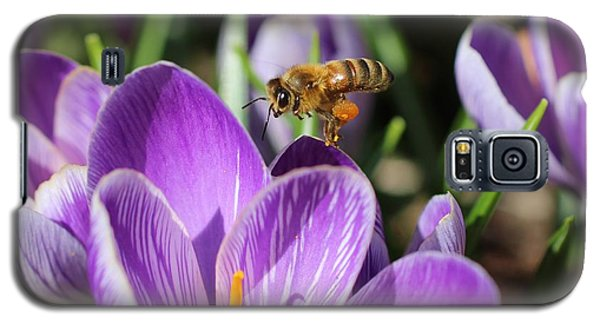 Honeybee Flying Over Crocus Galaxy S5 Case