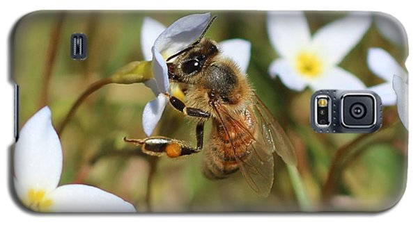 Honeybee On Bluet Galaxy S5 Case by Lucinda VanVleck
