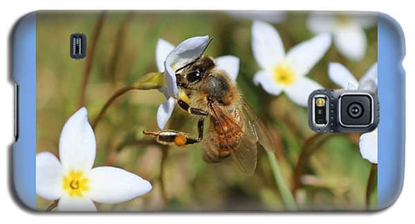 Honeybee On Bluet Galaxy S5 Case