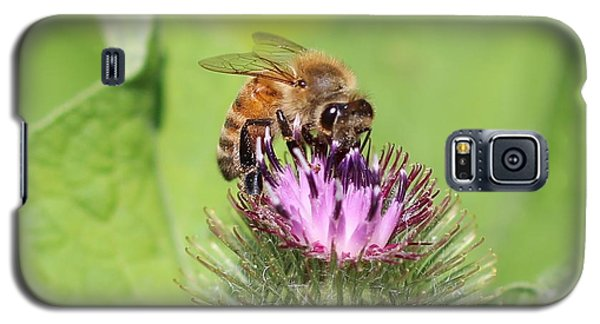 Honeybee On Burdock Galaxy S5 Case by Lucinda VanVleck