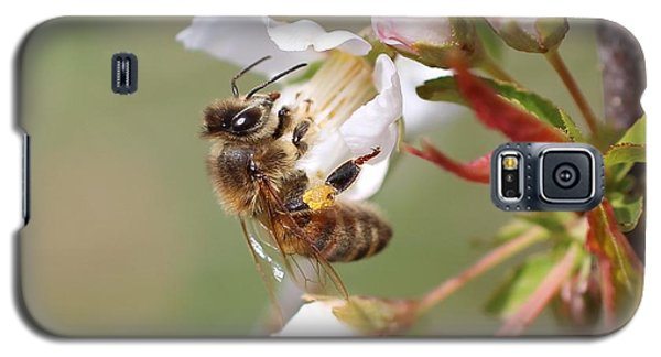 Honeybee On Cherry Blossom Galaxy S5 Case by Lucinda VanVleck