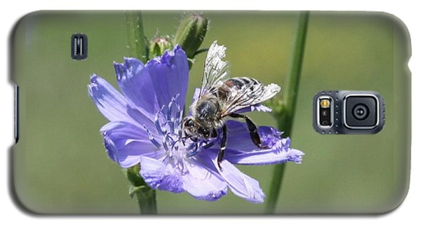 honeybee on Chickory Galaxy S5 Case by Lucinda VanVleck