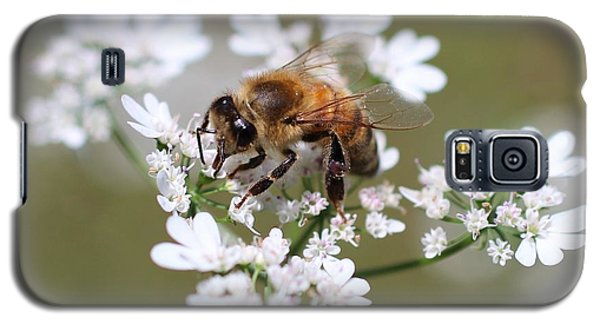 Honeybee On Cilantro Galaxy S5 Case