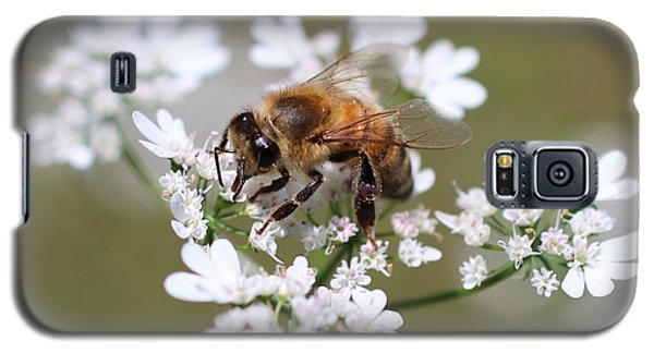 Honeybee On Cilantro Galaxy S5 Case by Lucinda VanVleck