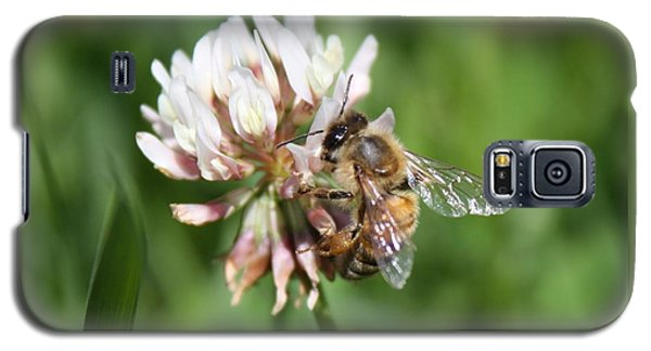 Honeybee On Clover Galaxy S5 Case