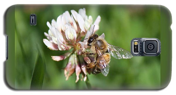 Honeybee On Clover Galaxy S5 Case by Lucinda VanVleck