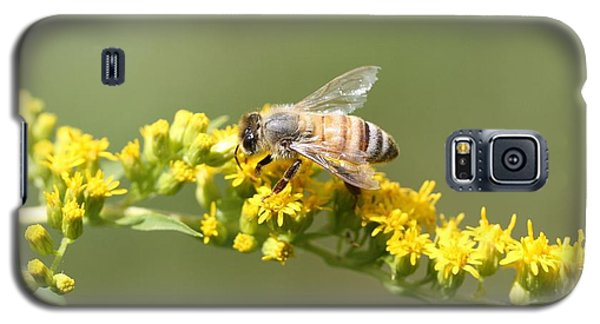 Honeybee On Goldenrod Twig Galaxy S5 Case by Lucinda VanVleck