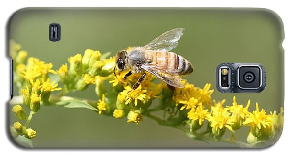 Honeybee On Goldenrod Twig Galaxy S5 Case