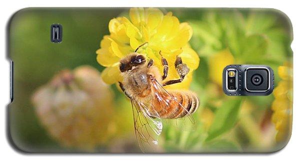 Honeybee On Hop Clover Galaxy S5 Case