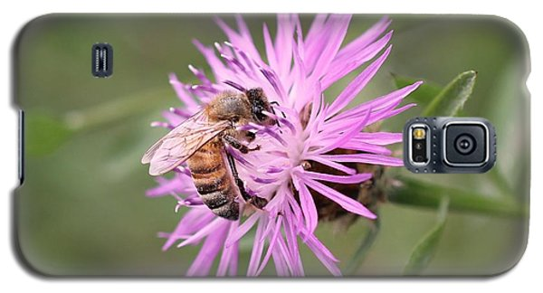 Honeybee On Ironweed Galaxy S5 Case by Lucinda VanVleck