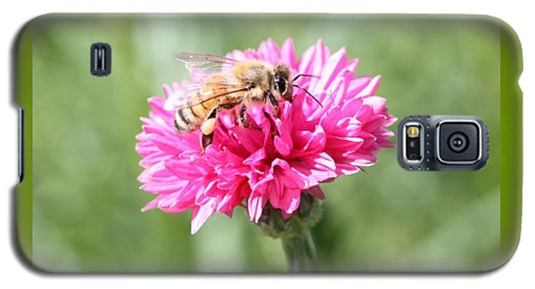 Honeybee On Pink Bachelor's Button Galaxy S5 Case by Lucinda VanVleck
