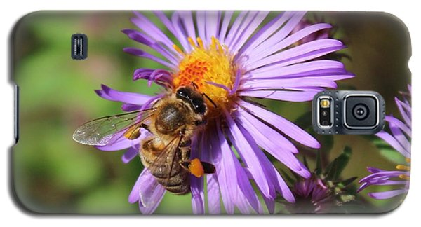 Honeybee On Purple Wild Aster Galaxy S5 Case by Lucinda VanVleck