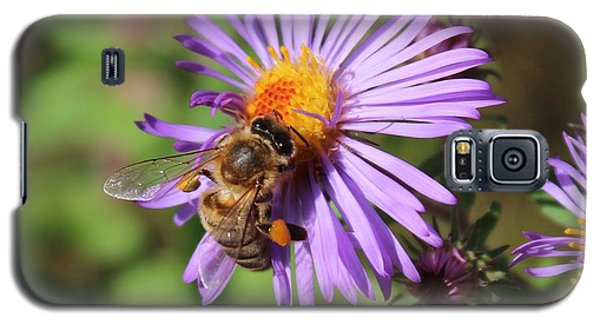 Honeybee On Purple Wild Aster Galaxy S5 Case