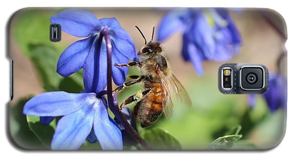 Honeybee On Siberian Squill Galaxy S5 Case by Lucinda VanVleck