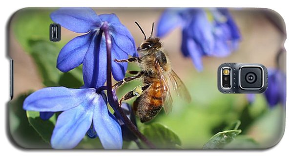 Honeybee On Siberian Squill Galaxy S5 Case