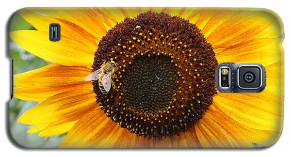 Honeybee On Small Sunflower Galaxy S5 Case by Lucinda VanVleck
