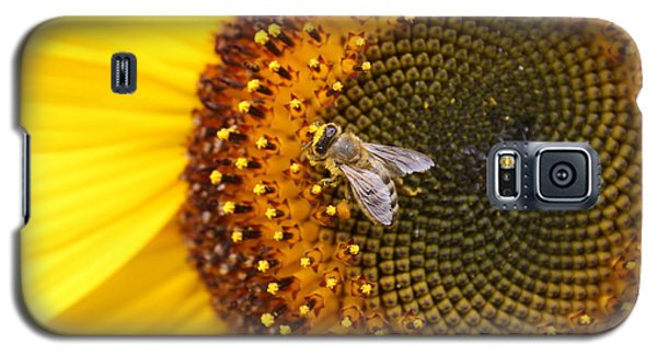 Honeybee On Sunflower Galaxy S5 Case by Lucinda VanVleck